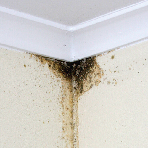 inadequate moisture removal can lead to mould formation.